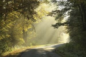 path and light.Medium